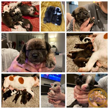 Puppies puppies puppies